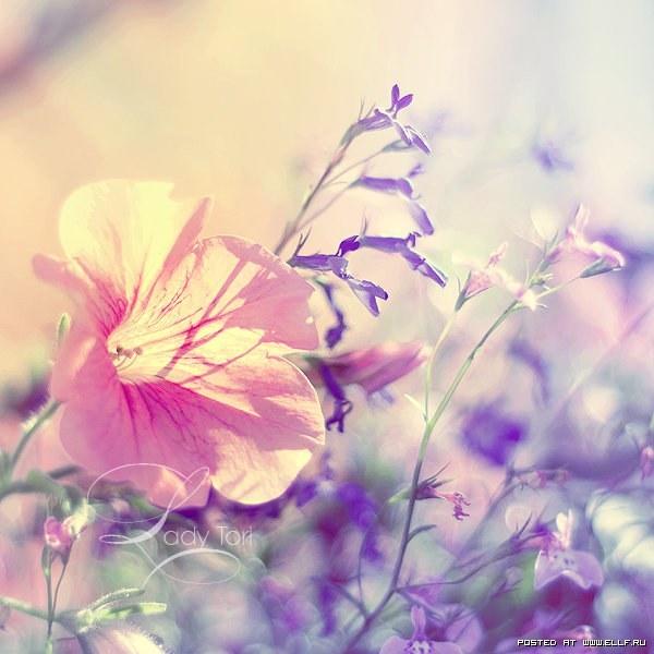 Нежность (Tenderness)
